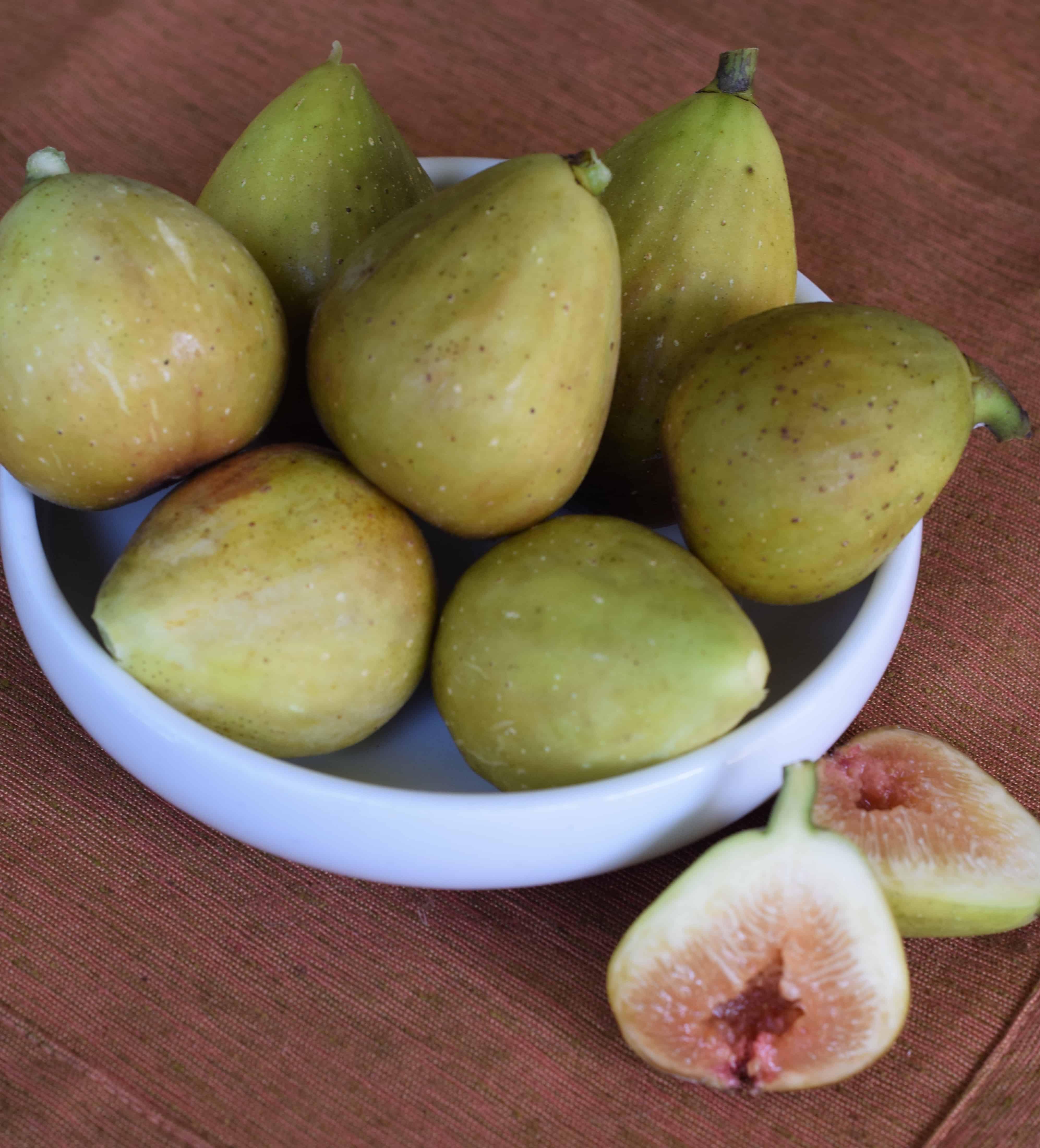 Fig harvest 1.jpg