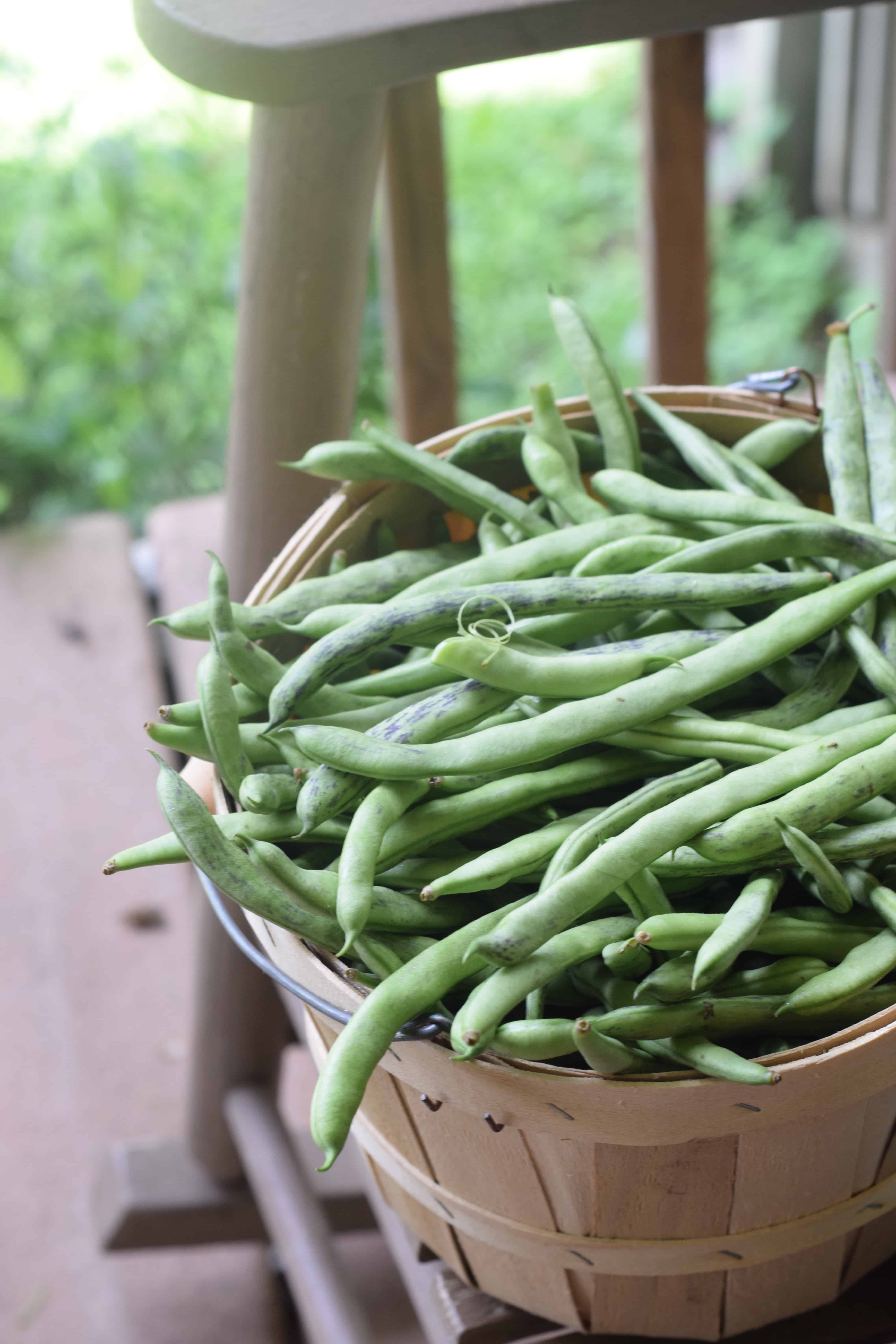 Green Beans on rocking chair.JPG