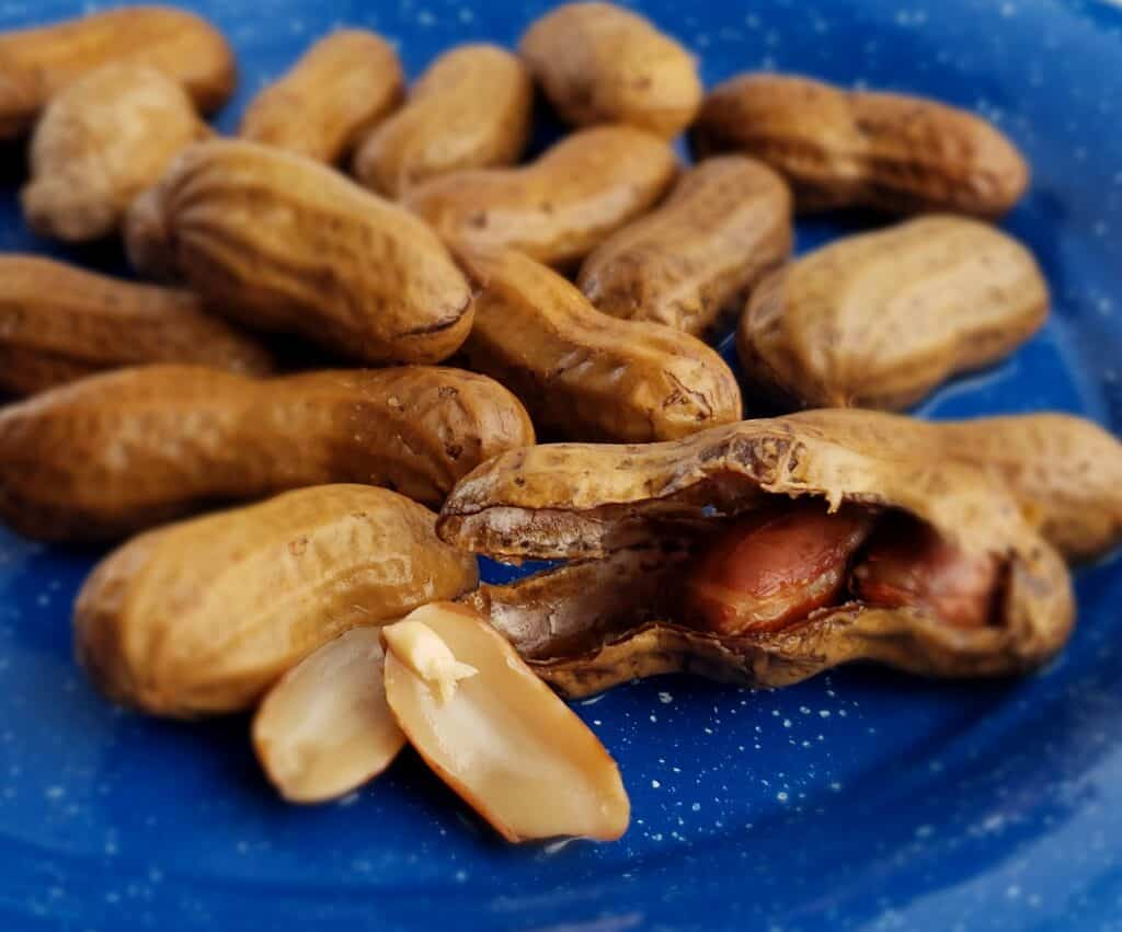 Boiled peanuts cracked open on a blue tin plate showing the inside of a peanut looks like a fish