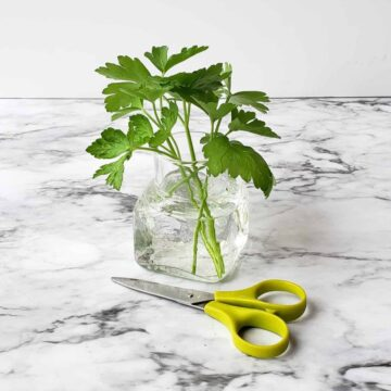 stems of fresh parsley in a short vase of water with small green scissors on a marble surface